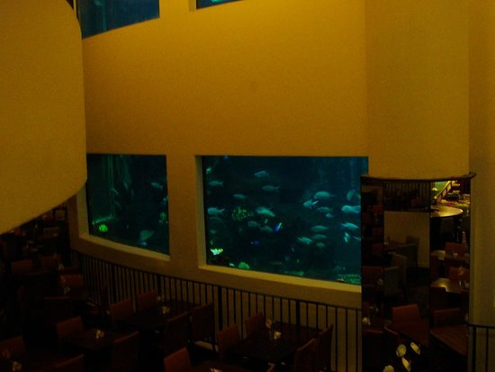 Pacific Beach Hotel : the fish tank