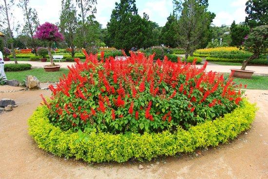 Dalat Flower Park 2