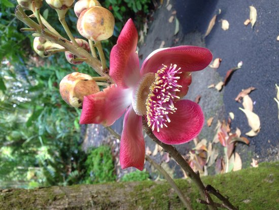Hawaii Tropical Botanical Garden: One of the many orchids I came across