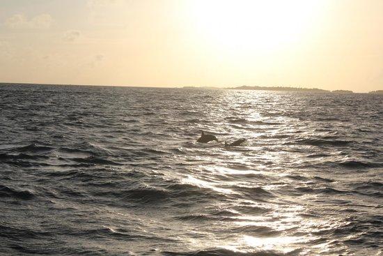 Kurumba Maldives : Dolphin cruise