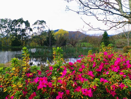 Sanctuary Park Cottages: beautiful lake and gardens
