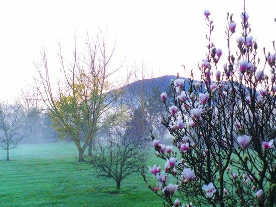 Sanctuary Park Cottages: beautiful foggy crisp morning