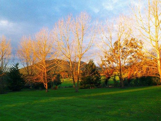 Sanctuary Park Cottages: beautiful trees