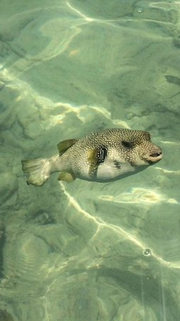 SunConnect Sunrise Diamond Resort: Fish!!