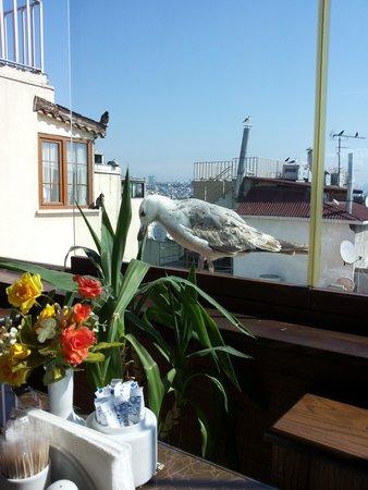 Hotel Centrum Istanbul: Resto