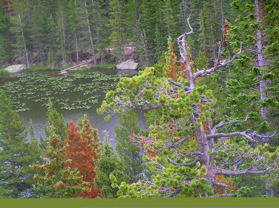 Bear Lake Trailhead: bosco