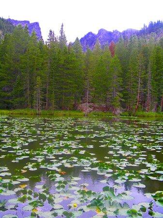Bear Lake Trailhead: nymph lake