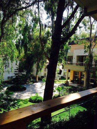 Jacaranda Club & Resort: Территория отеля.