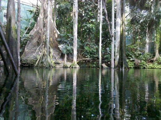 CosmoCaixa Barcelona : ricostruzione foresta amazzonica