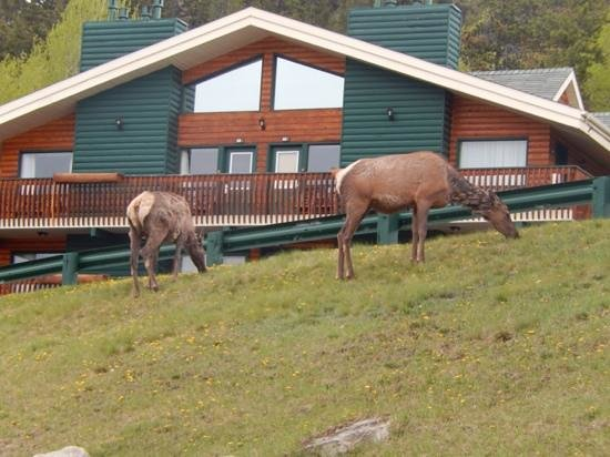 Pyramid Lake Resort: grazing outside our lodge