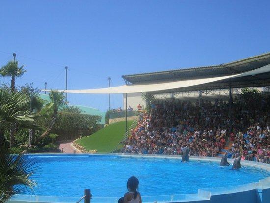 Zoomarine Algarve : Delfin show
