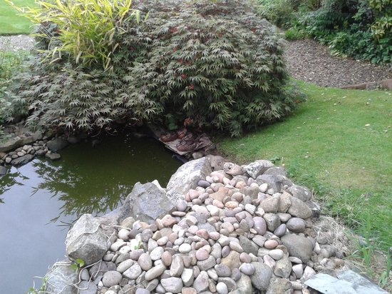 Temple Sowerby House Hotel : The resident wild duck family