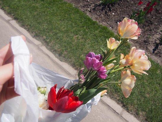 Tulip Park : 掘取販売、球根ごと入れてくれます