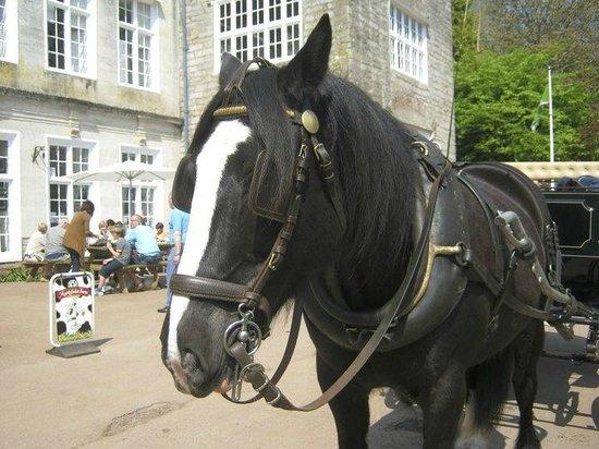 Cockington Court: Horse and carriage ride in Cockington