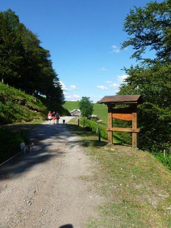 Ferme Auberge du Felsach: the road to the inn