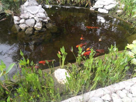 Suncity Hotel & Beach Club : balıklar havuzu