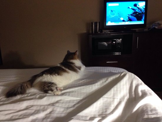 La Quinta Inn & Suites Macon West: Princess loves LaQuinta!