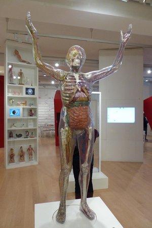 Wellcome Collection: Medicine Now exhibition (5)