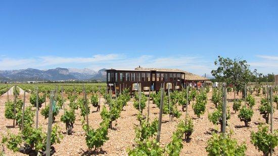 Mallorca Wine Tours: Enjoy a unique wine tour with us
