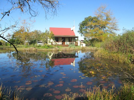 Forest Edge Nature-lovers' Retreat: Froggie pond