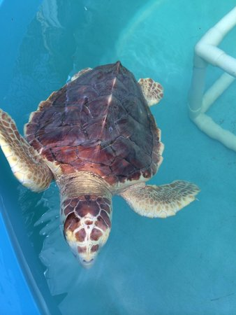 The Turtle Hospital : Cute