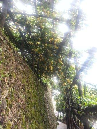 Agriturismo Villa Maria: Walkway through the gardens