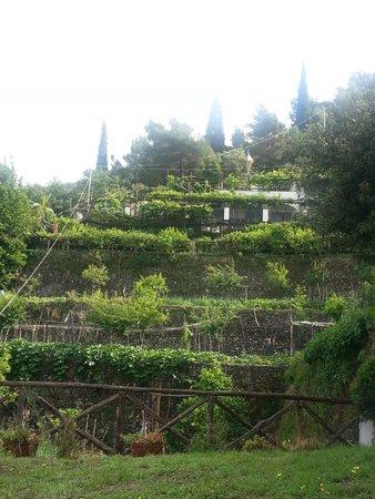 Agriturismo Villa Maria: The 'garden' of Villa Maria