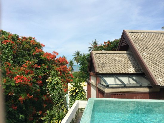 Centara Villas Samui : Tiny view from the pool in our room