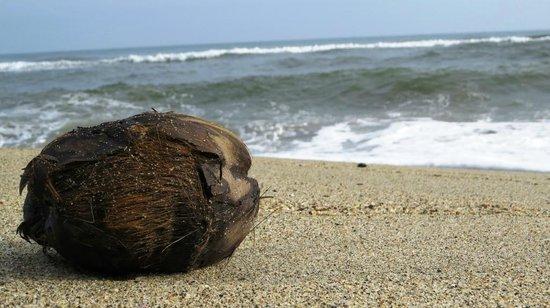 Costeno Beach Surf Camp: Coconut