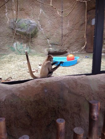 Peoria Zoo: The monkeys were active and fun to watch
