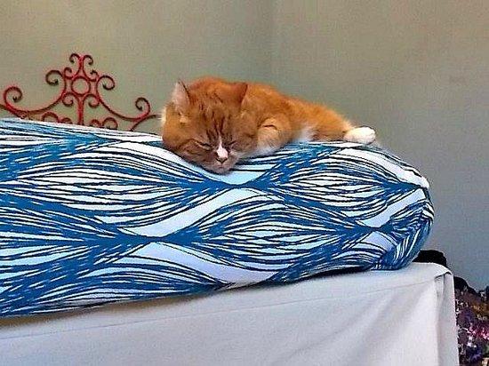 3B Beauty Bed and Breakfast: camera azzurra che il micio Boris ha molto gradito