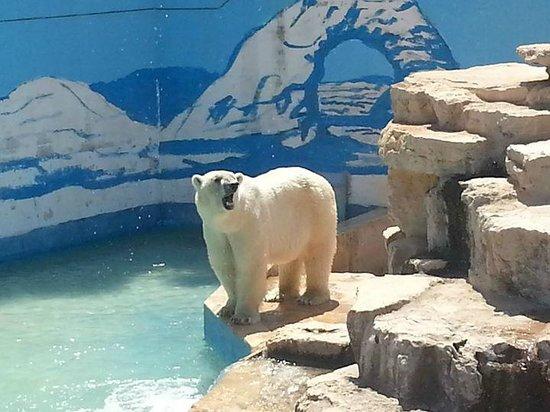 L 39 orso polare foto di fasanolandia fasano tripadvisor for Affitti cabina grande lago orso