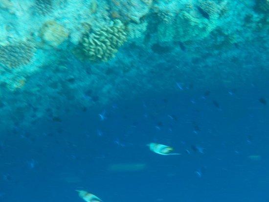 Ellaidhoo Maldives by Cinnamon: Riff