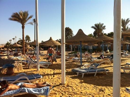 Queen Sharm Resort: spiaggia