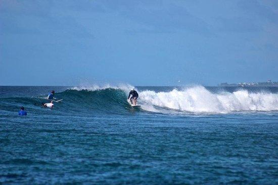 Just Surf Villa & Lodge Maldives: longboard