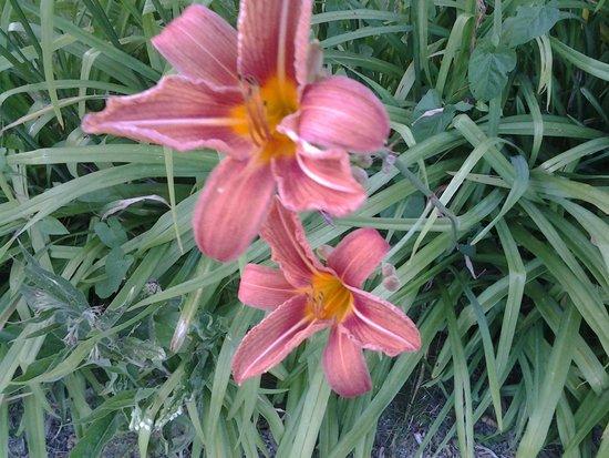 La Cressonnière : juste une fleurs pour vous laissez la surprise