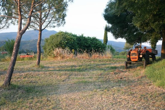 Agriturismo Sant'Emilia: Unterhalb der Terasse