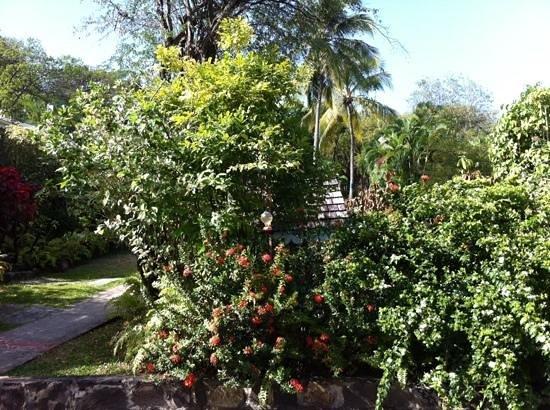 East Winds: hummingbirds feeding in the garden