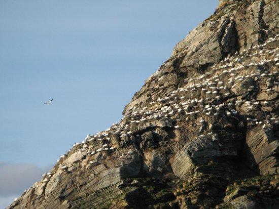 Gjesvaerstappan Nesting Cliffs, Nordkapp