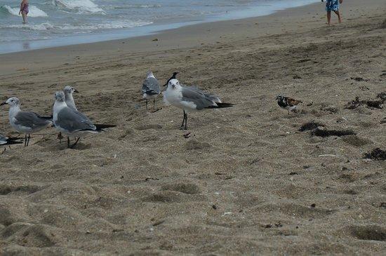 Club Med Sandpiper Bay: На пляже