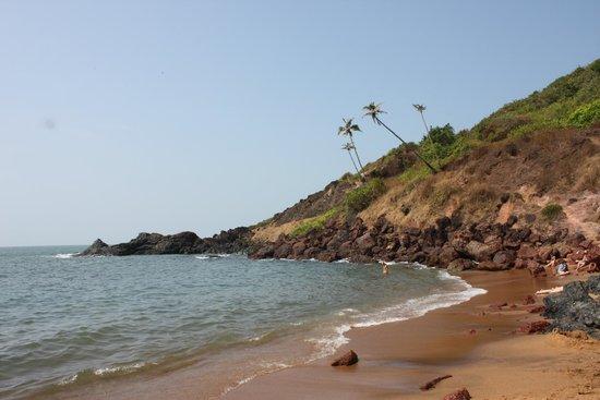 Resorte Marinha Dourada: Пейзаж с пальмами.