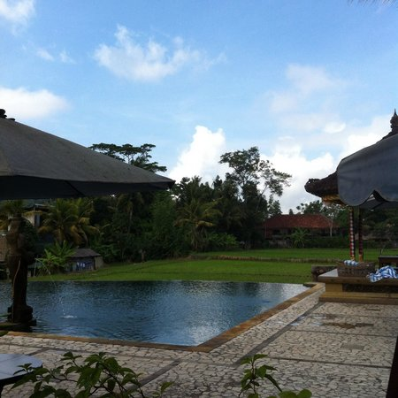 Cendana Resort and Spa : Infinity pool overlooking paddy fields with local farmers working on the fields, many swallows f