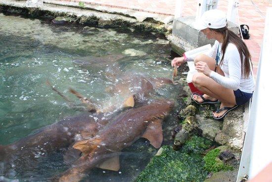 Theater of the Sea: Feeding Fish