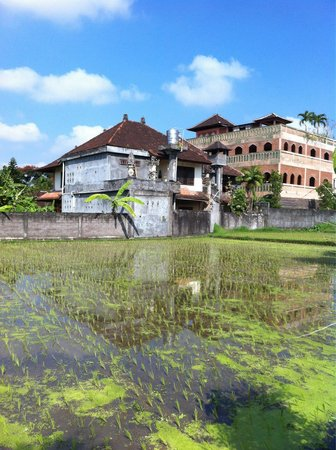 Cendana Resort and Spa: Another view of paddy fields
