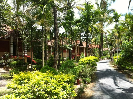 Wayanad Nature Resorts: View from inside Entrance of the resort
