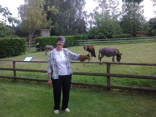 Hawk Conservancy Trust : A great day out for to celebrate Nans' Birthday!