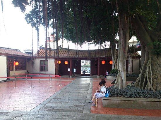 Qingjinmen Township Zhongbingshu : 院內古榕