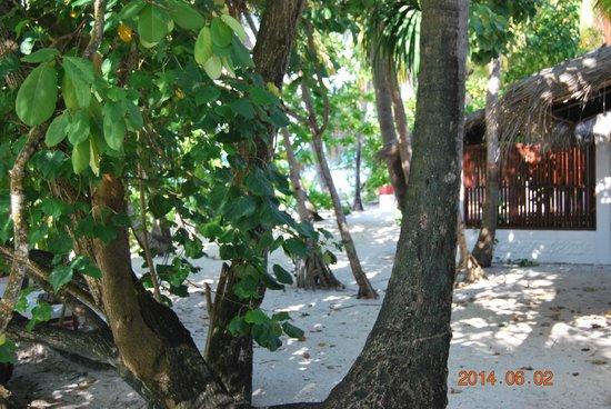 Angaga Island Resort & Spa : Schöner Weg zum Abendessen