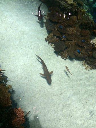 National Aquarium, Baltimore : Awesome Aquarium!