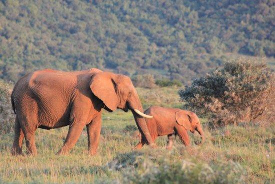 Quatermains 1920s Safari Camp: amakhala game reserve